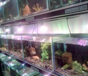 Atlanta Acuario - tienda de peces in Costa Rica